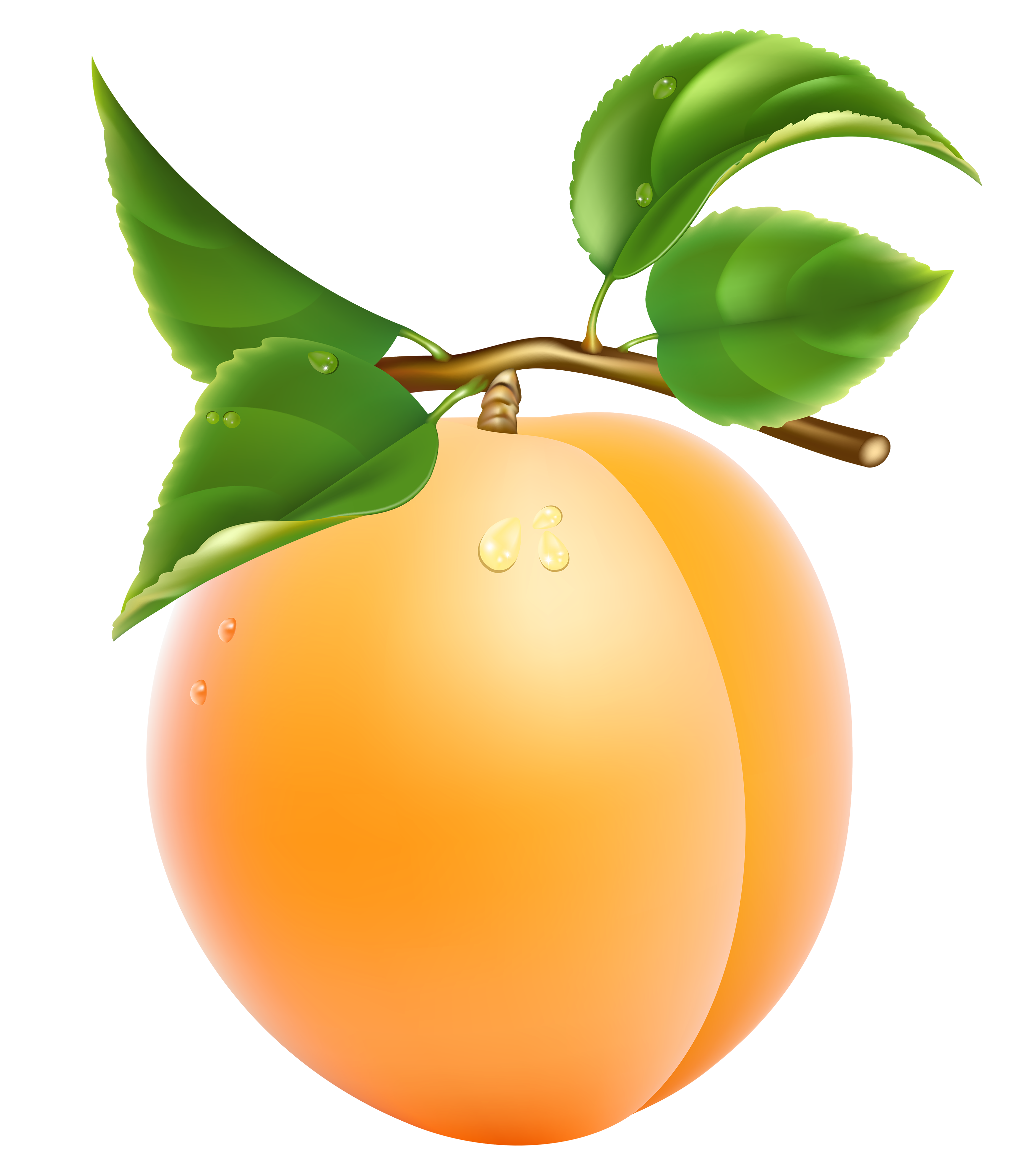 Apricot PNG - 17391