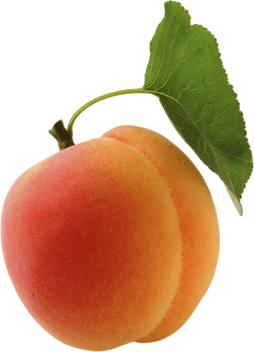 Apricot PNG - 17402