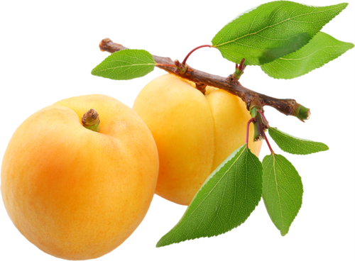 Apricot PNG - 17398