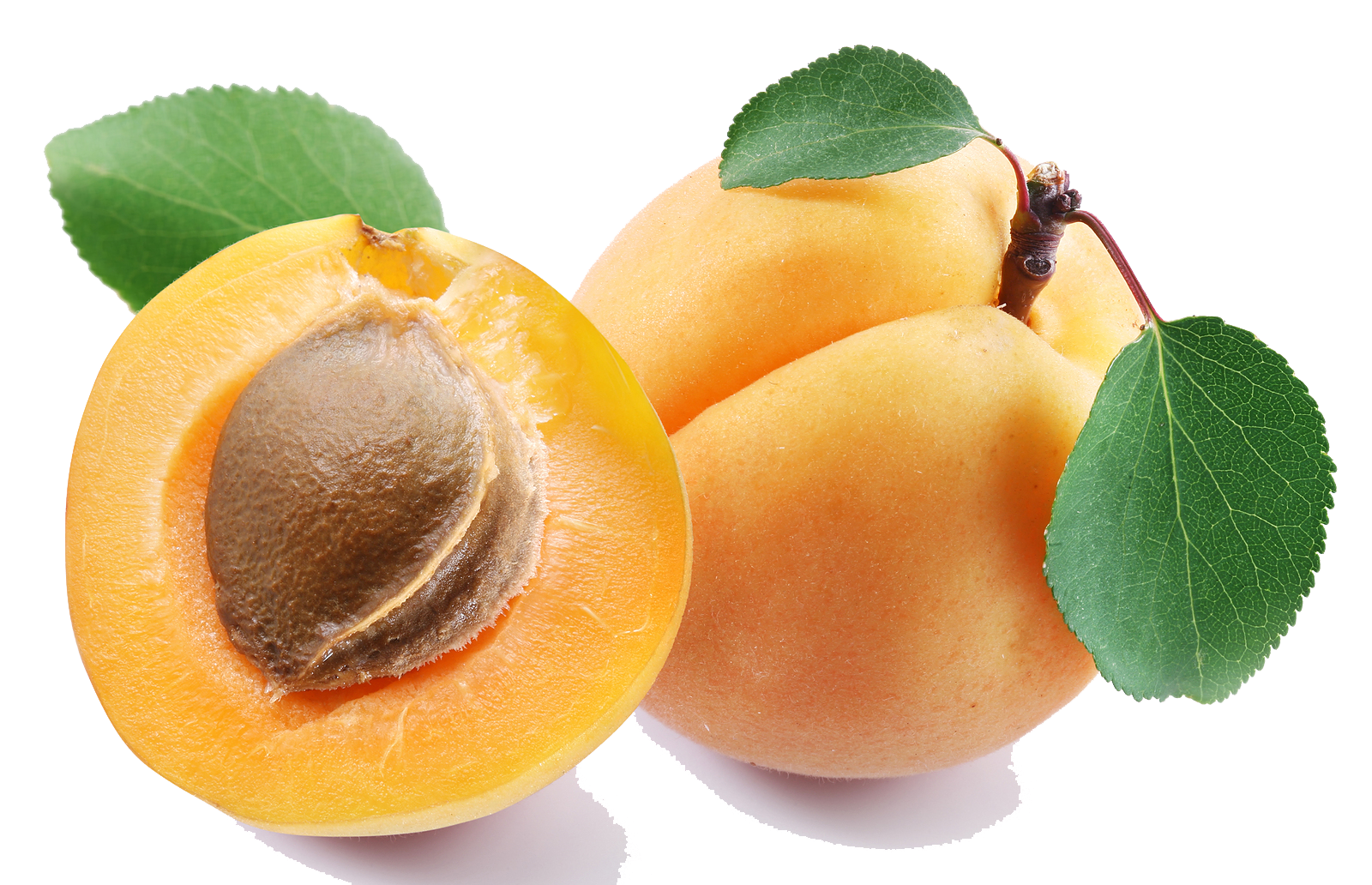 Apricot PNG Clipart - Apricot PNG