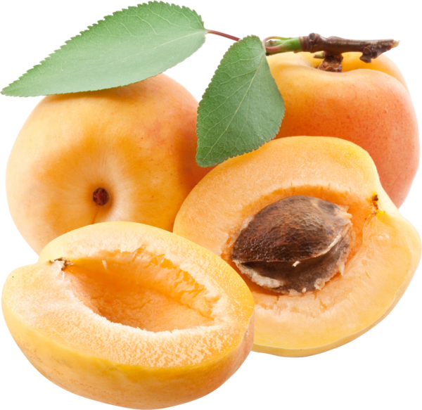Apricot PNG - 22311