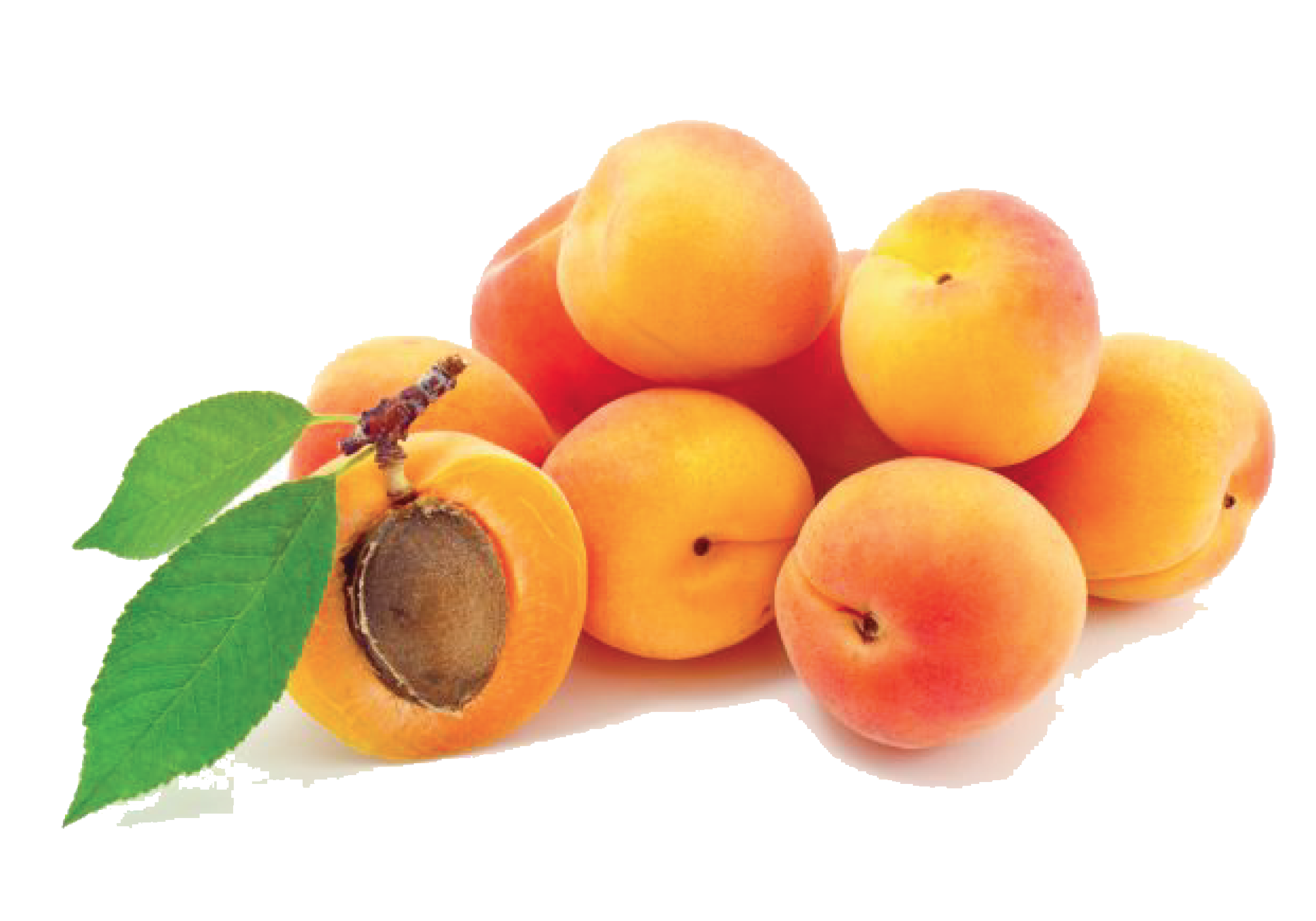 Apricot PNG Transparent Apricot.PNG Images. | PlusPNG