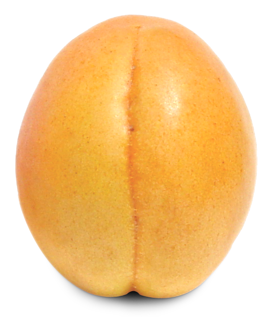 Apricot PNG - 17399