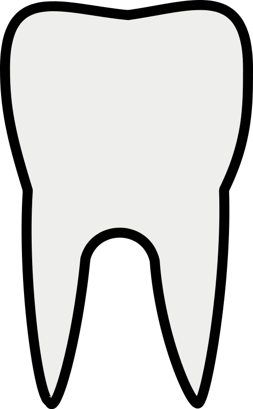 free vector Tooth Line Art - Free PNG Teeth - Art Free PNG