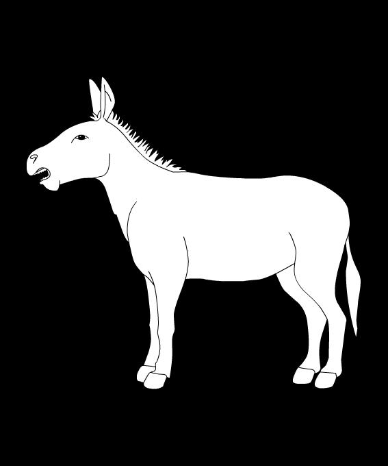 asino - Asino PNG