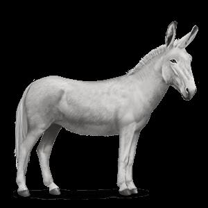 asino asino bianco - Asino PNG