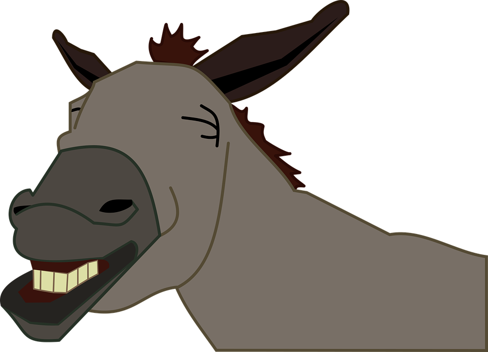burro asino jackass - Asino PNG