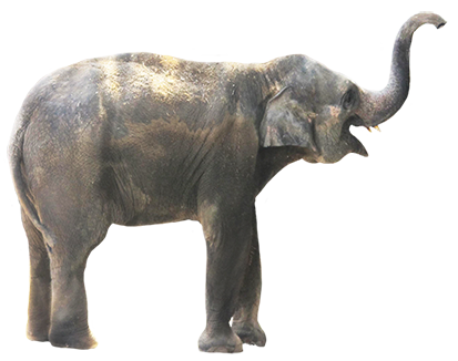 . PlusPng.com Elephant clip art PNG - Australian Animal PNG HD