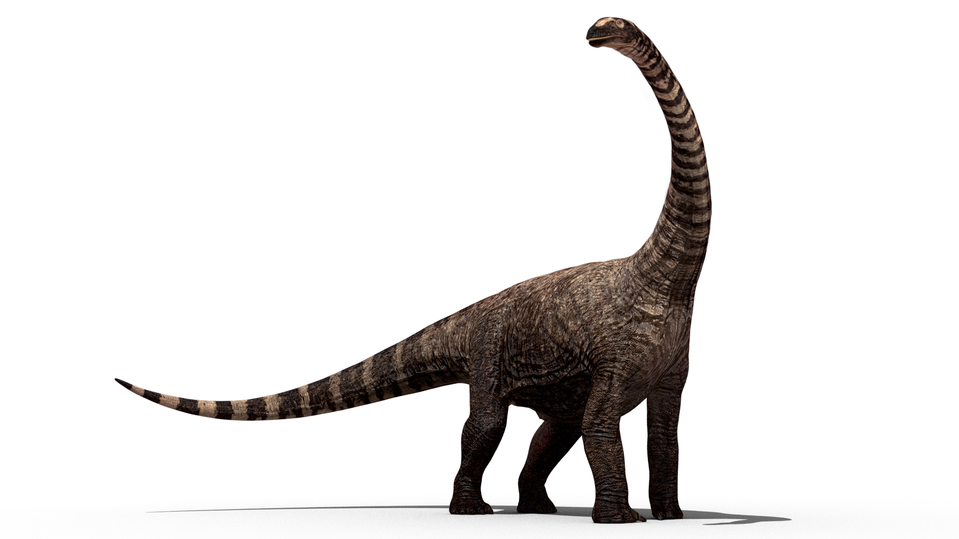 Rhohetosaurus - Australian Animal PNG HD