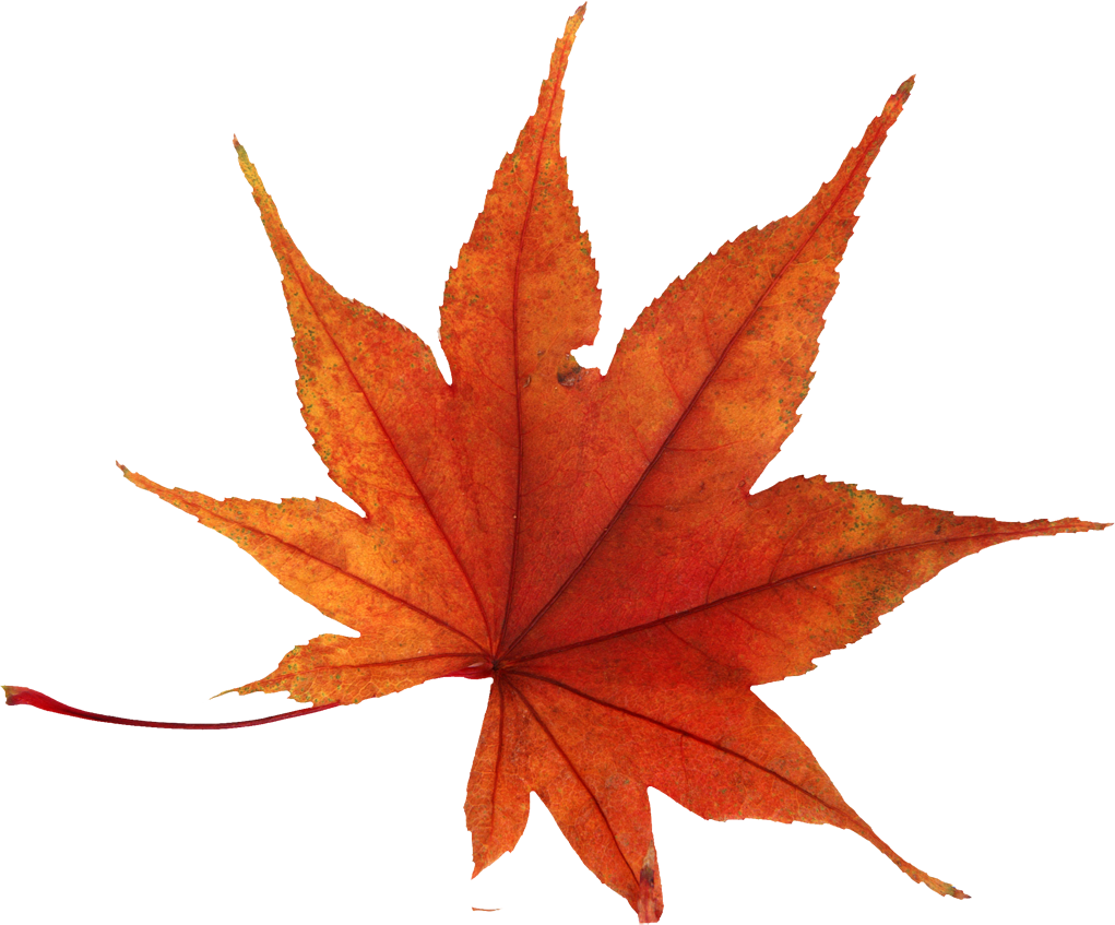 Autumn Leaves HD PNG - 96869