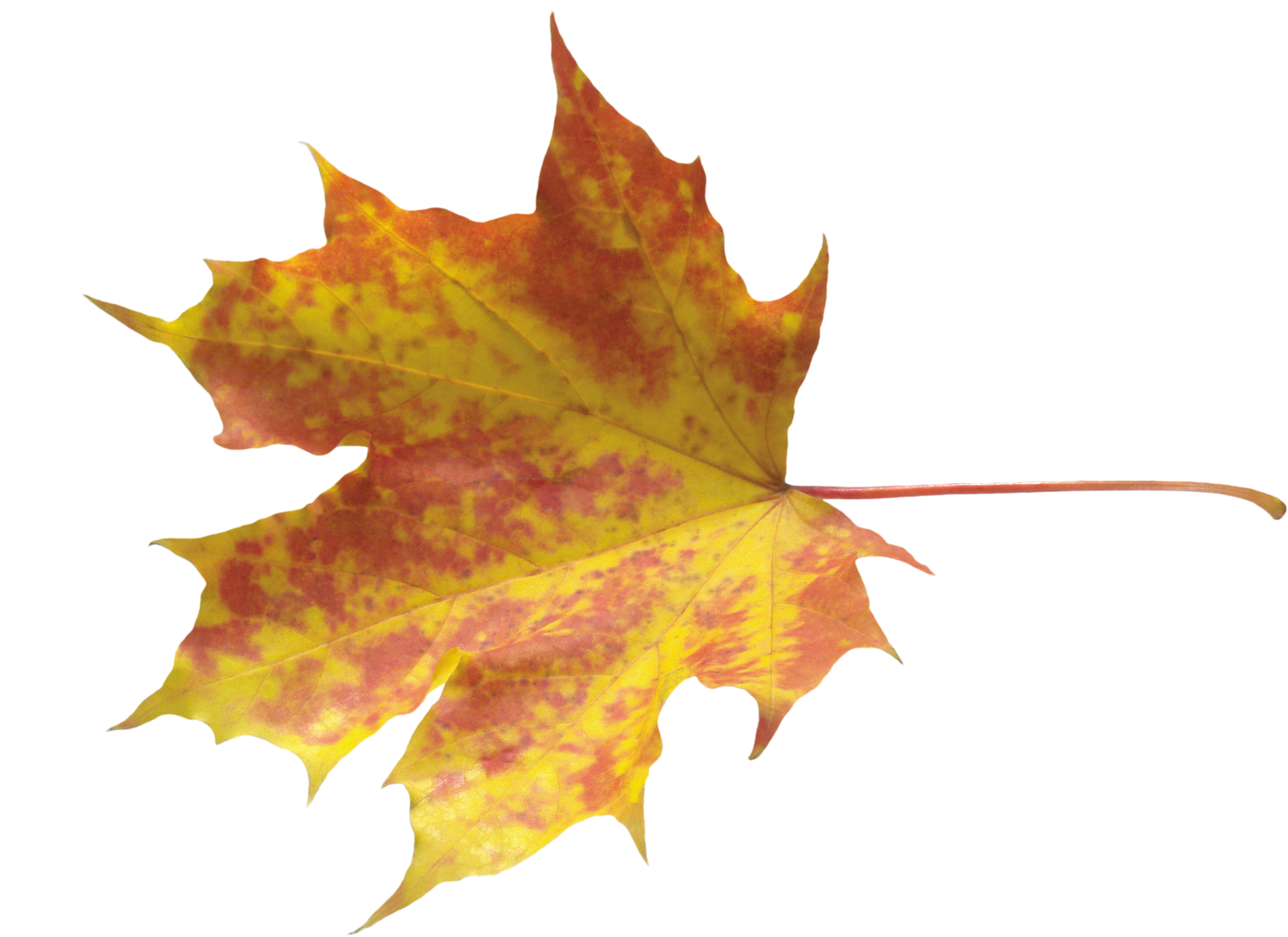 Autumn Leaves HD PNG-PlusPNG.com-2800 - Autumn Leaves HD PNG