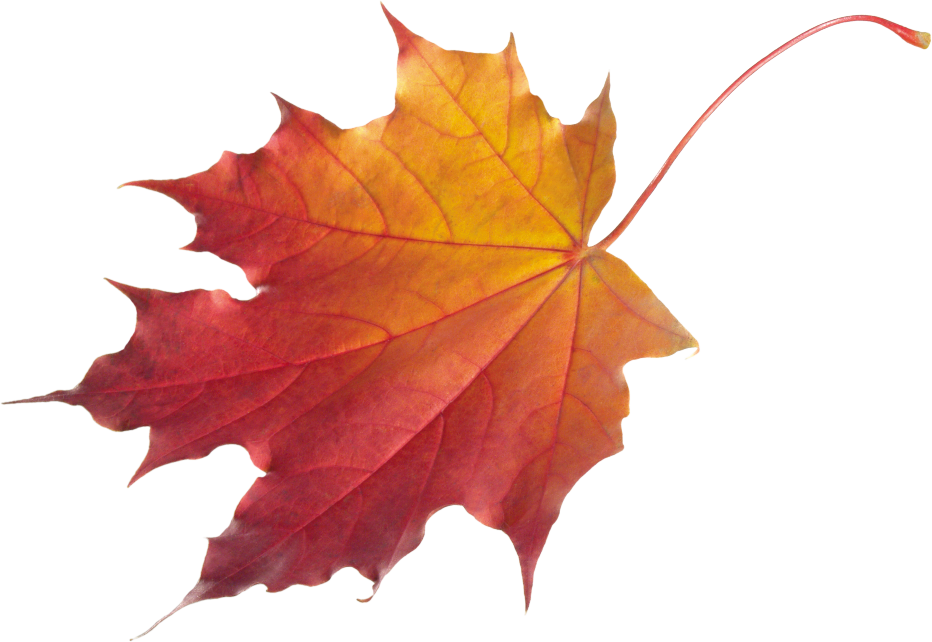Autumn Leaves HD PNG-PlusPNG.com-3101