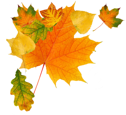 Autumn Leaves HD PNG - 96878