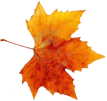 Autumn Png By VanessaRebelAngel PlusPng.com  - Autumn Leaves HD PNG