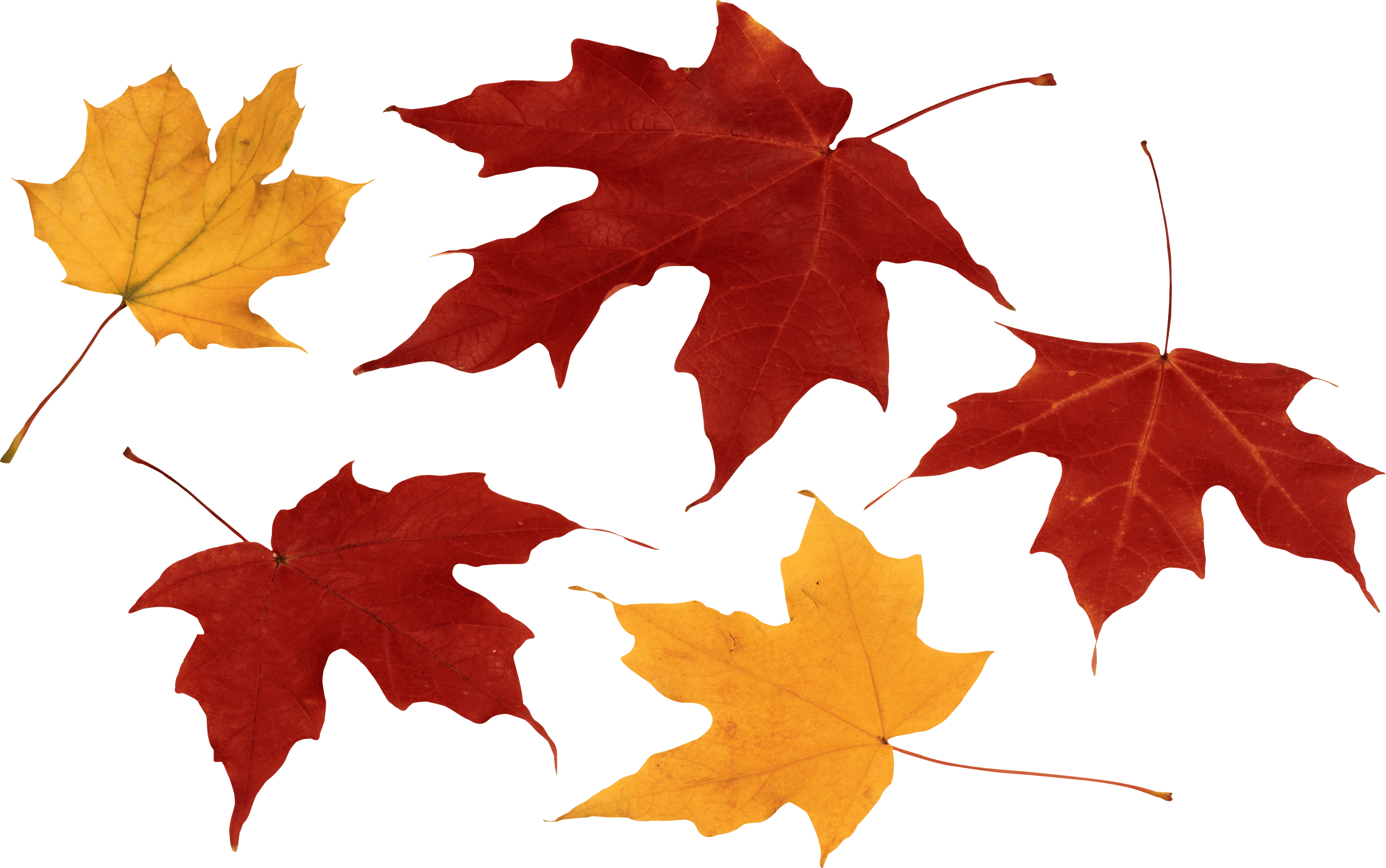 Autumn Leaves HD PNG - 96868