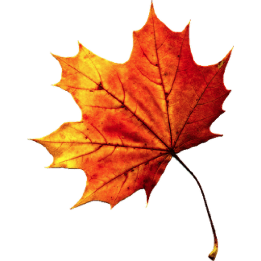 Autumn Leaves HD PNG - 96872