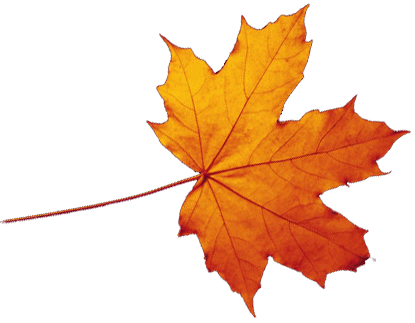 Autumn Leaves HD PNG - 96875