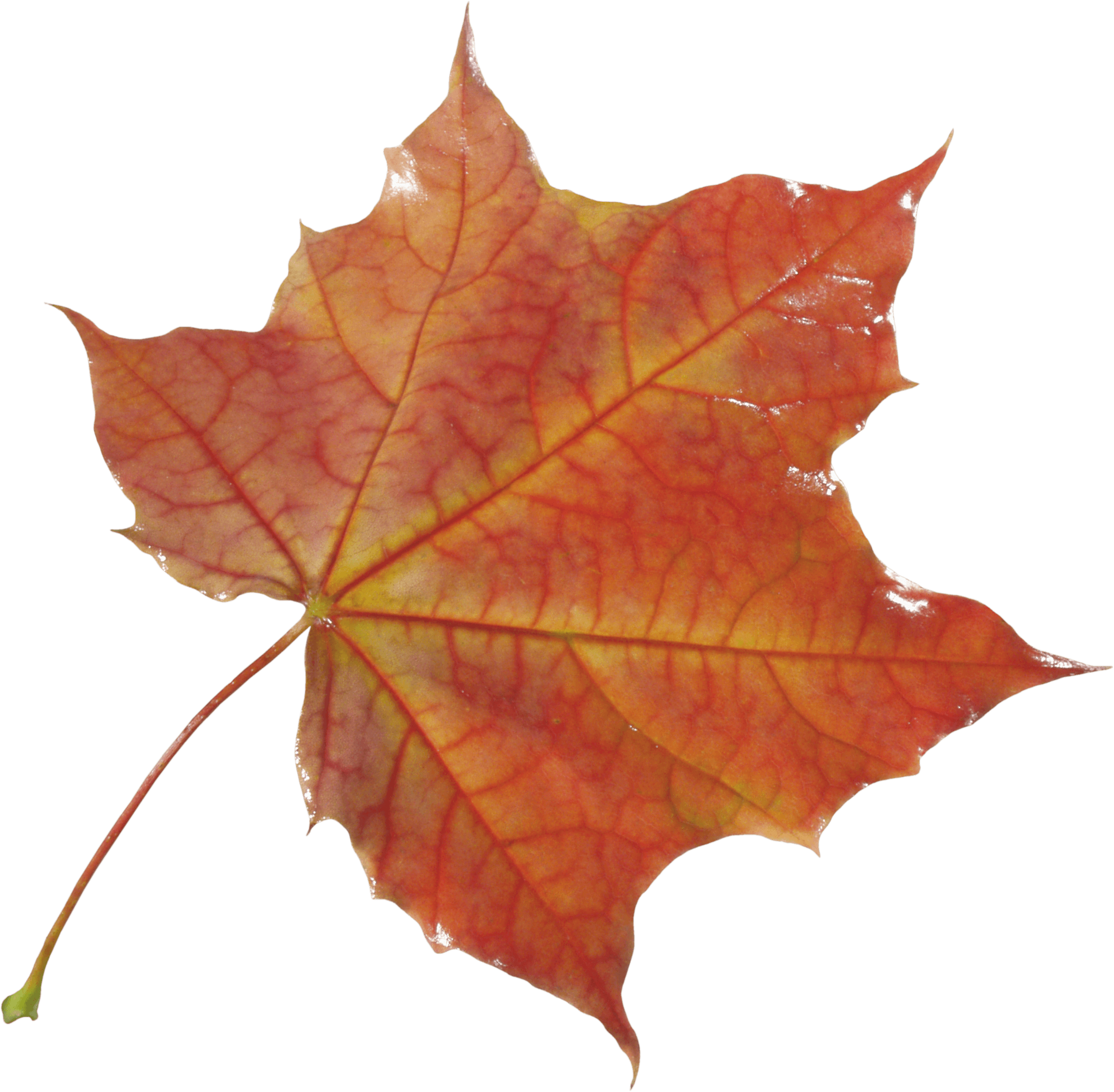 Autumn Png Leaf PNG Image - Autumn PNG