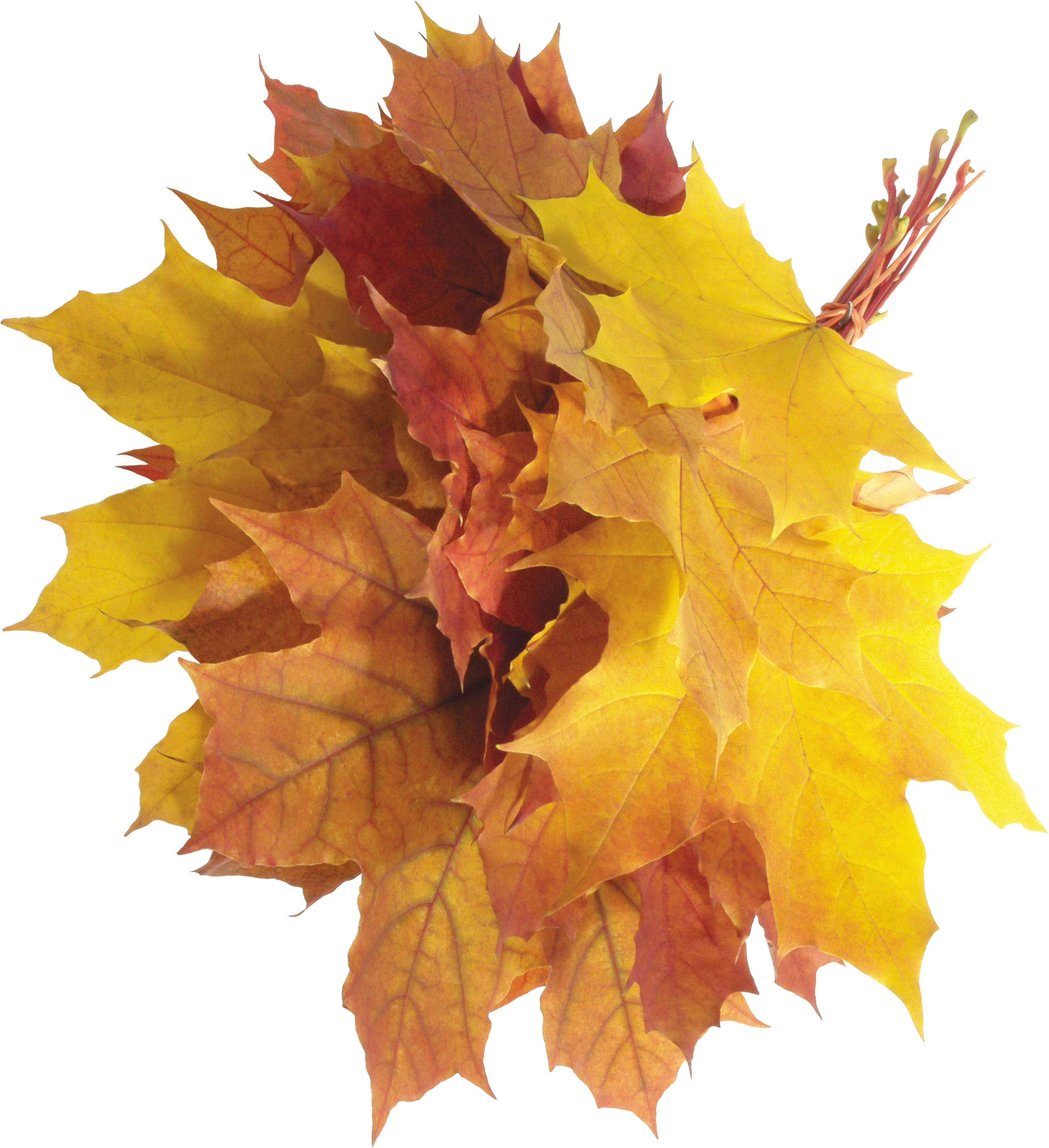 Autumn PNG Leaves - Autumn PNG