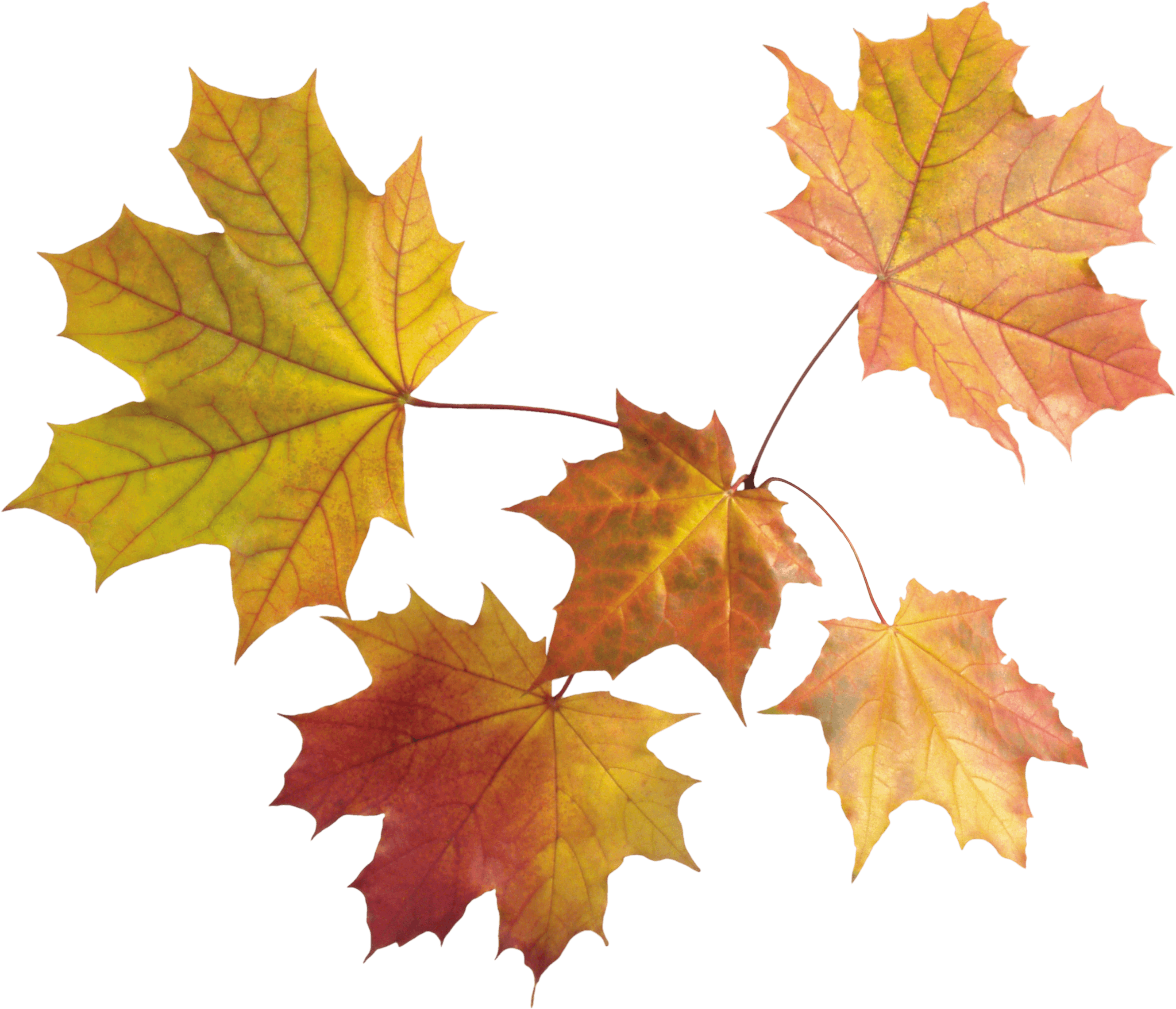 Autumn Png Leaves PNG Image - Autumn PNG