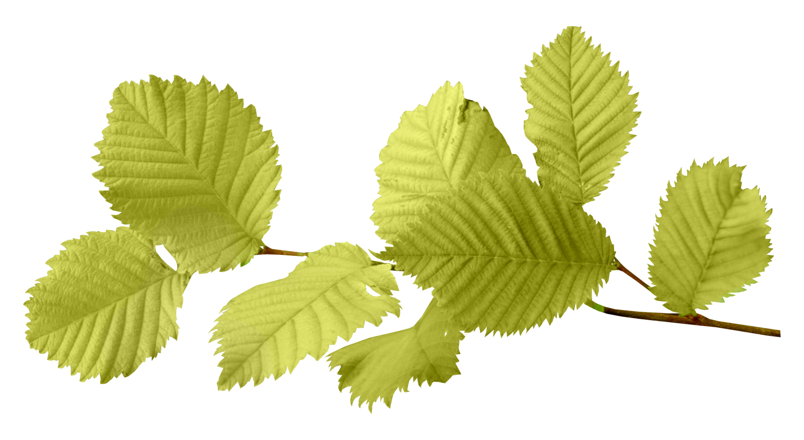 Autumn PNG Leaf - Leaves PNG