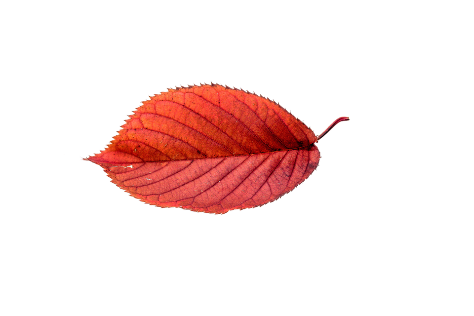 Autumn Leaves Leaf Transparent Fall Color Colorful - Autumn Sun PNG