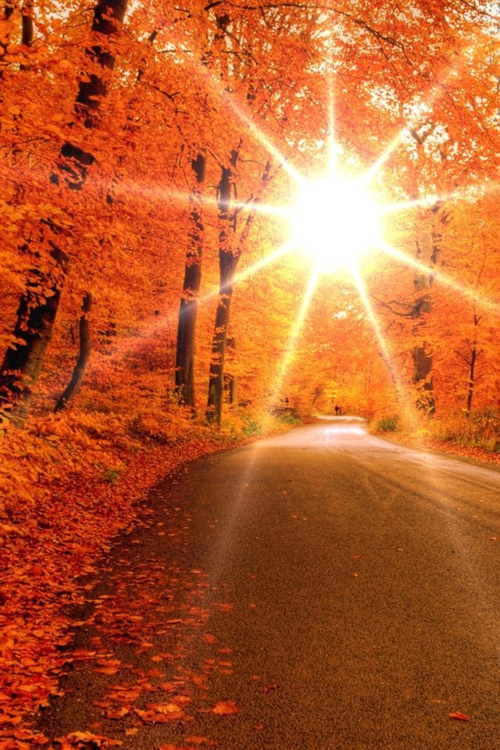 Bright Autumn Sun More - Autumn Sun PNG