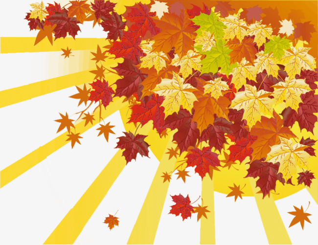 Late autumn sun in the morning, Sunlight, Defoliation, Maple Free PNG and  PSD - Autumn Sun PNG