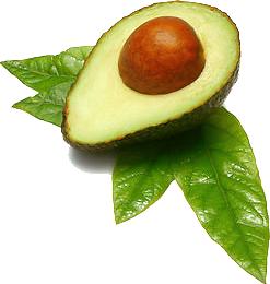 Avocado PNG - 18165