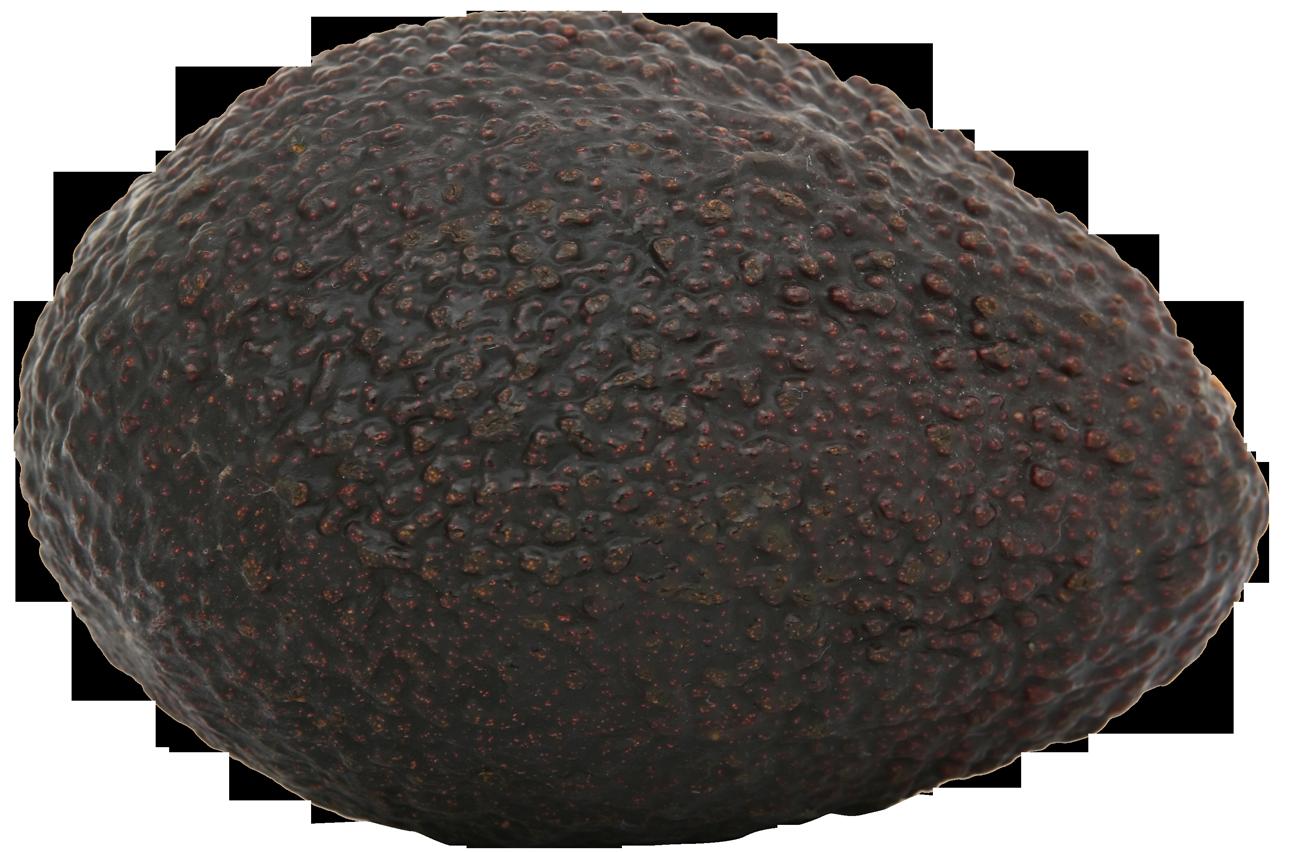 Avocado PNG - 18160