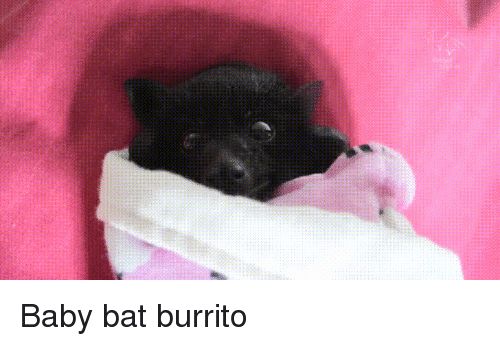 Baby, Bat, and Burrito: Baby bat burrito - Baby Bat PNG