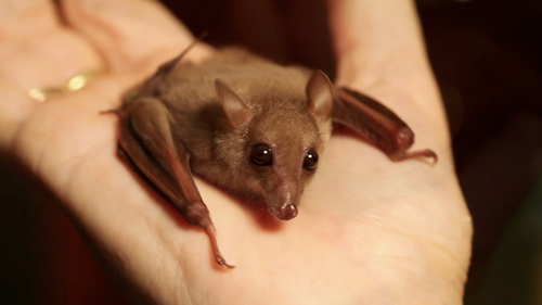 Bat hand - Baby Bat PNG