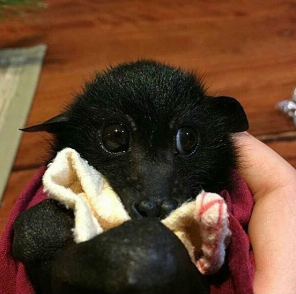 Funny animal - Baby Bat PNG