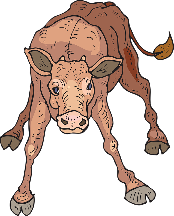 Baby Calf PNG - 138800