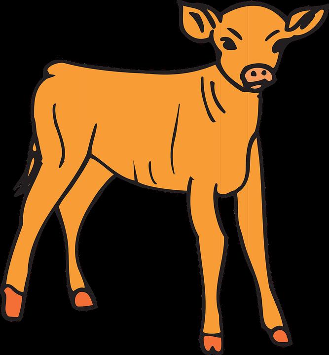 Baby Calf PNG - 138792