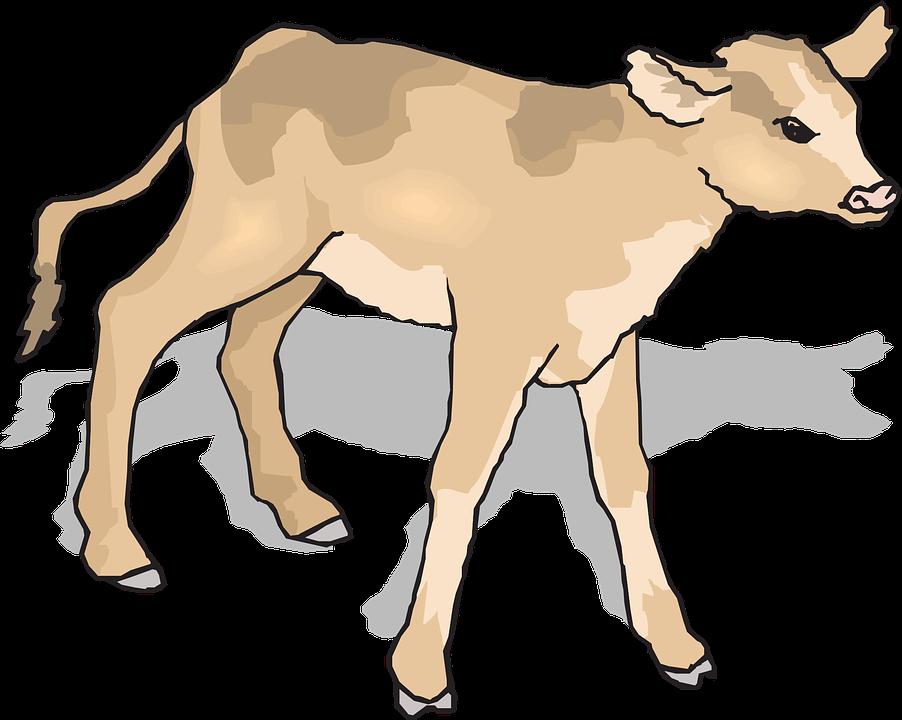 Baby Calf PNG - 138787