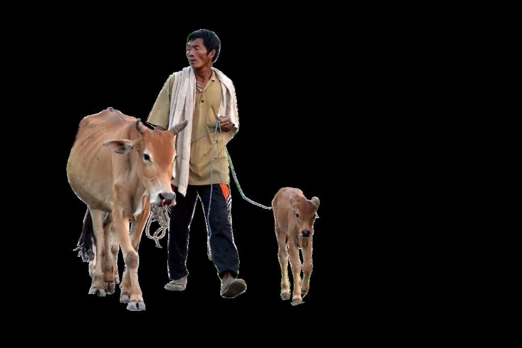 Baby Calf PNG - 138795