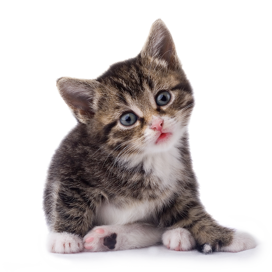 Baby Cat PNG