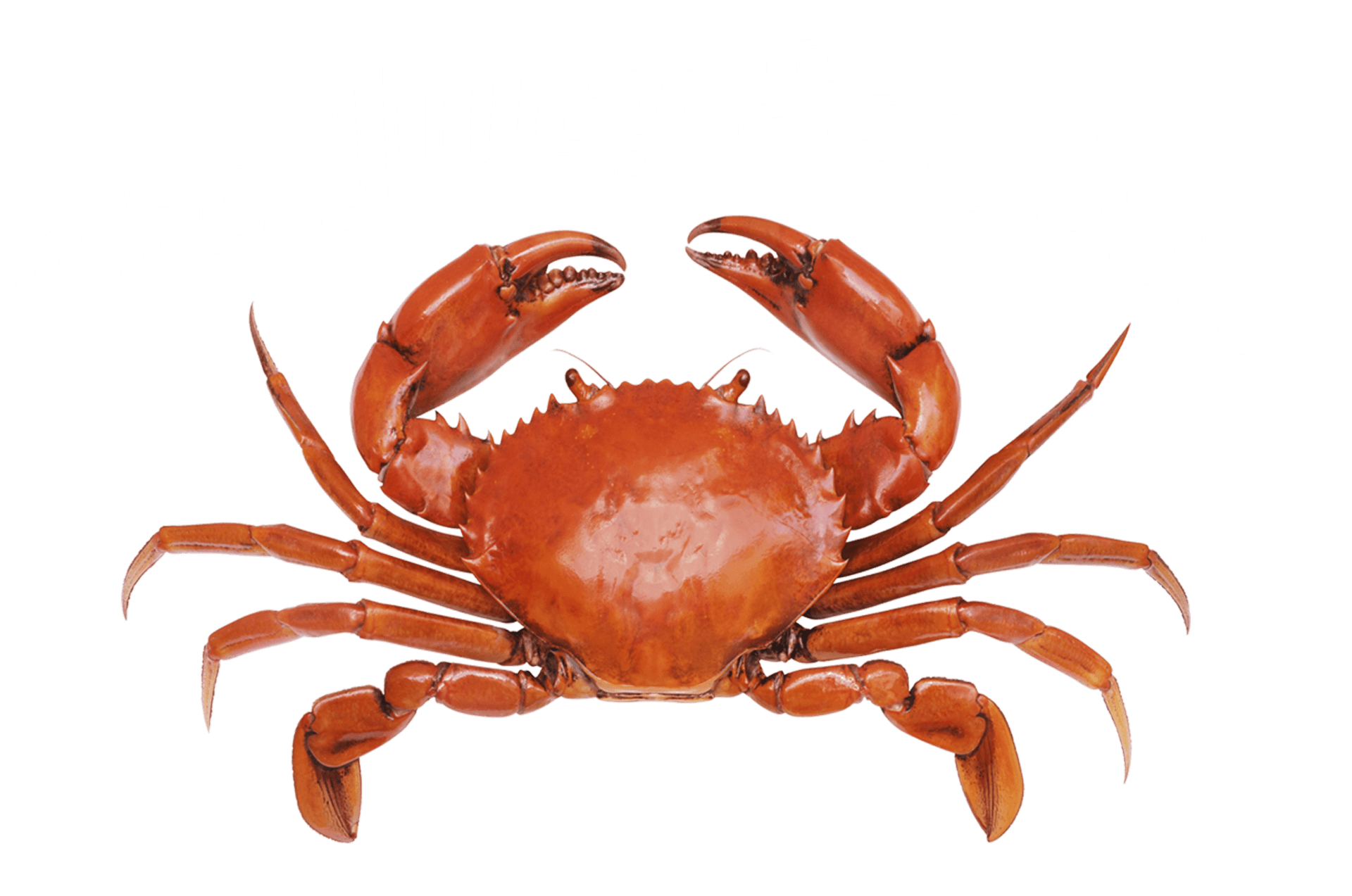 Local Seafood Restaurant Savannah, GA - Baby Crab PNG