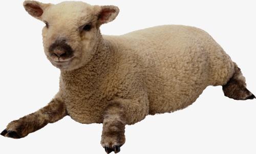 Baby Lamb PNG - 46753
