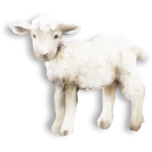 Baby Lamb PNG - 46748