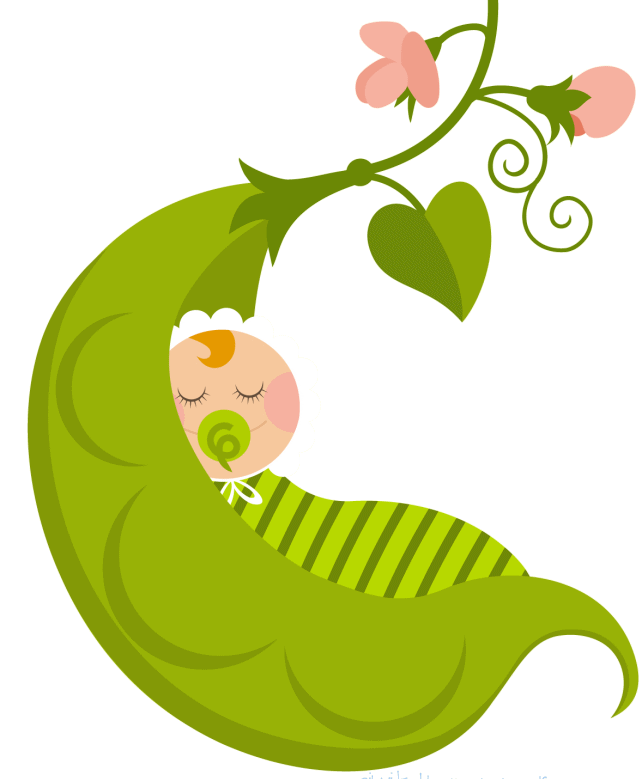 Baby Pea Pod PNG