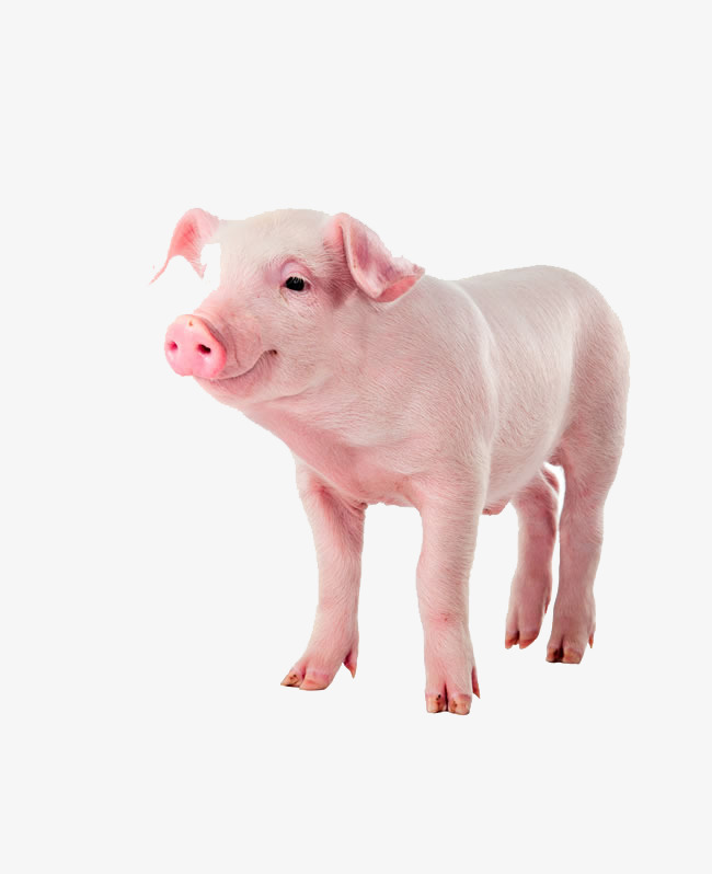 Baby Pig PNG HD - 129641