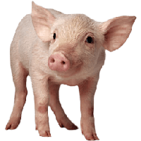 Baby Pig PNG HD - 129634
