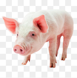 Baby Pig PNG HD - 129638