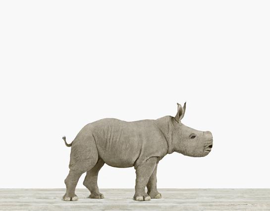 Baby Rhino - Baby Rhino PNG