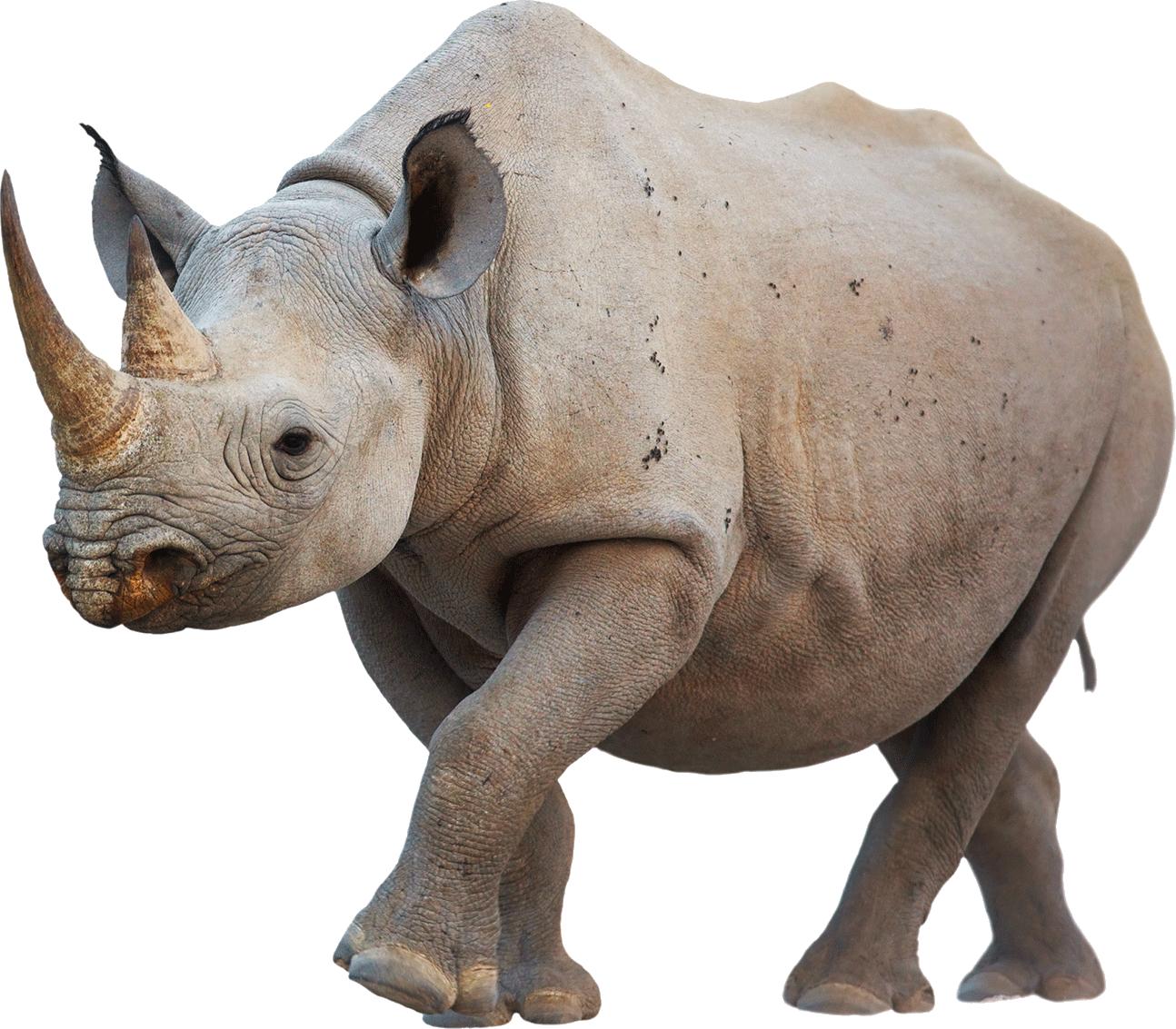 Rhino - Baby Rhino PNG