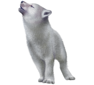 PLEASE vote for my wolf PlusPng.com  - Baby Wolf PNG