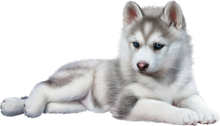 Share this Image - Baby Wolf PNG