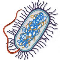 200px-Bacteria.png PlusPng.com  - Bacteria PNG HD
